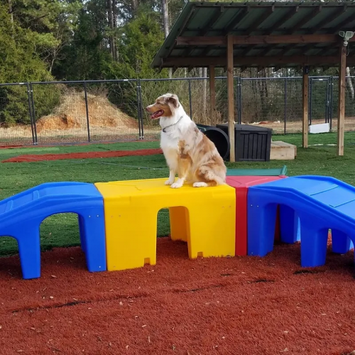 Dog Daycare Equipment