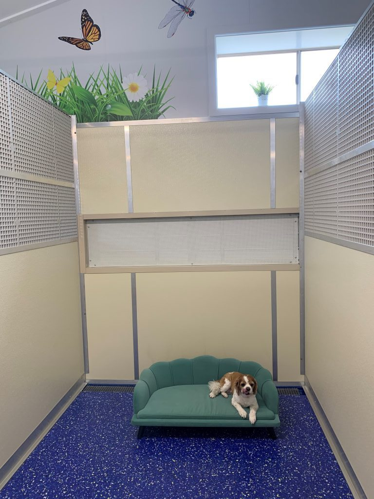 Dog Resort Rooms
